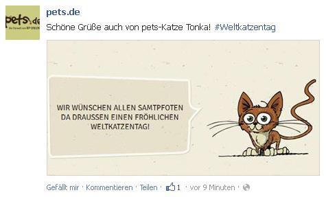 Pets.de Weltkatzentag